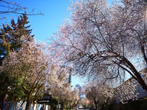 Vancouver,smelltheroses