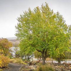 Lystigarðurinn User Photo