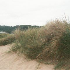 奧馬哈海灘用戶圖片
