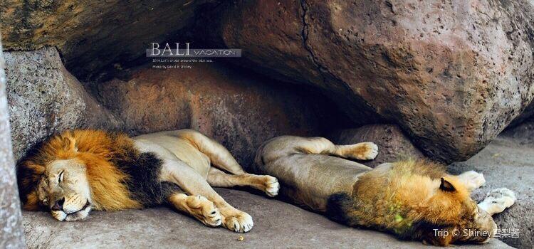 Bali Safari and Marine Park3