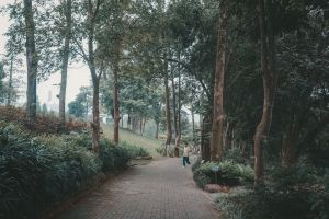 Pokhara,smelltheroses