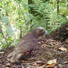 Kapiti Coast User Photo