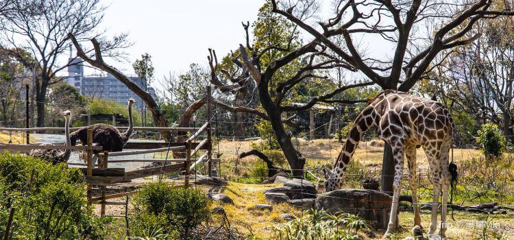 Tennoji Zoo2