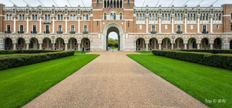 Rice University3