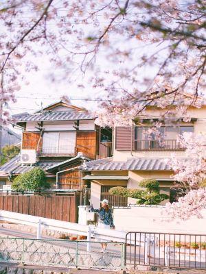 京都,推薦