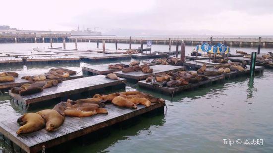 Sea Lion Center