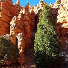 Red Canyon User Photo