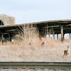 Buffalo Central Terminal User Photo
