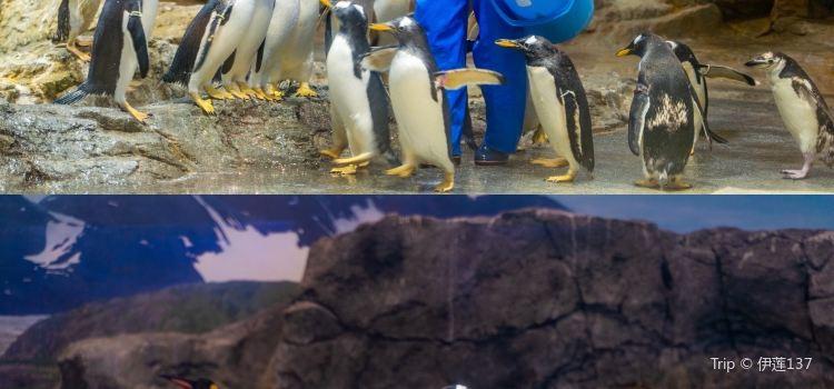 長崎企鵝水族館2