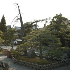 젠코지 여행 사진