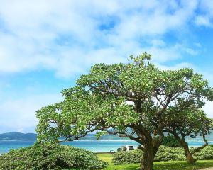 香港-久米島 機票酒店 自由行