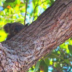 Noosa National Park User Photo