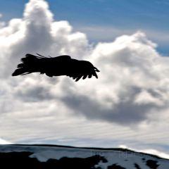 Jasper SkyTram User Photo