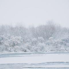 昭蘇濕地公園景區用戶圖片