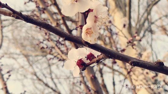 杏花灘公園