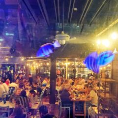 Blue Fish User Photo