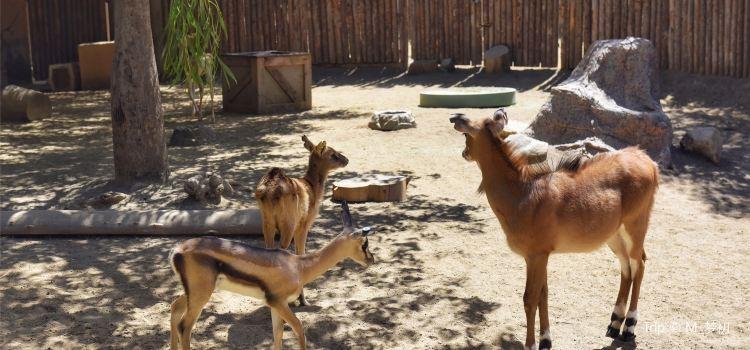 San Diego Zoo Safari Park3