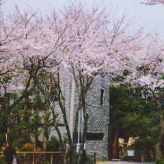 제주대학교 아라캠퍼스 여행 사진