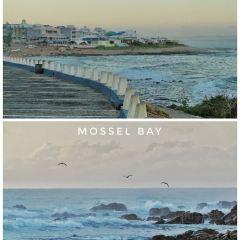 摩索灣用戶圖片