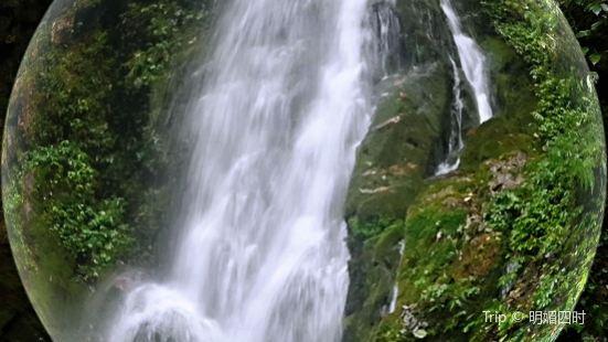梵淨山生態植物園