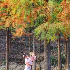 Tianjing Mountain National Forest Park User Photo