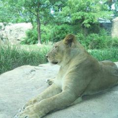 Cincinnati Zoo & Botanical Garden用戶圖片