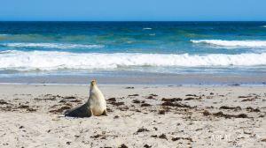 Kangaroo Island,Recommendations