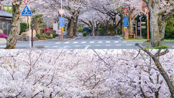 日本旅行分享