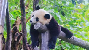 Dujiangyan,Recommendations