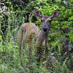 Radnor Lake State Park User Photo