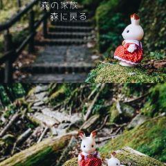 屋久杉自然館用戶圖片