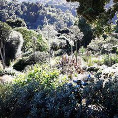 Otari-Wilton's Bush User Photo