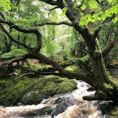 Tollymore Forest Park User Photo