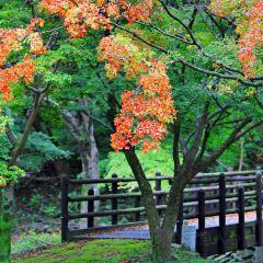 내장산국립공원 여행 사진