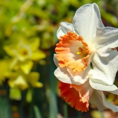 Cheekwood Botanical Garden and Museum of Art User Photo