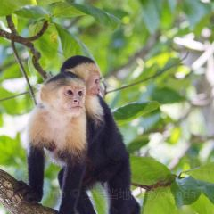 Manuel Antonio National Park User Photo