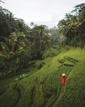 Bali,Recommendations