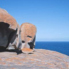 澳洲塔馬穀用戶圖片