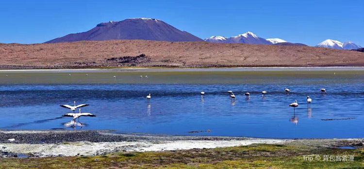 Laguna Hedionda2