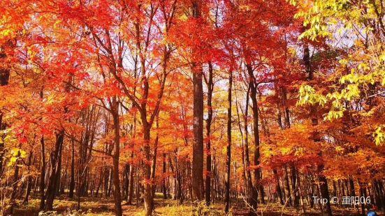 三道關國家森林公園