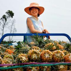 Pineapple Sea User Photo