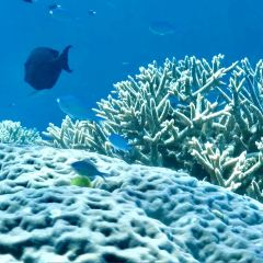 Great Barrier Reef Diving User Photo