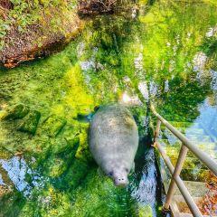 Blue Spring State Park User Photo