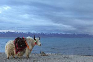 當雄,西藏旅行照