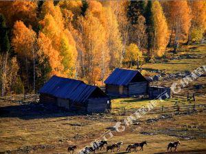 布爾津禾木秋語山莊