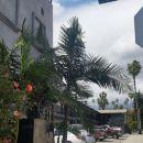 洛杉磯好萊塢棕櫚旅館&套房酒店(Hollywood Palms Inns & Suites Los Angeles)