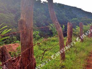 勐臘雨林傳說民宿