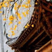 成都藍城悅杏溫泉美食酒店