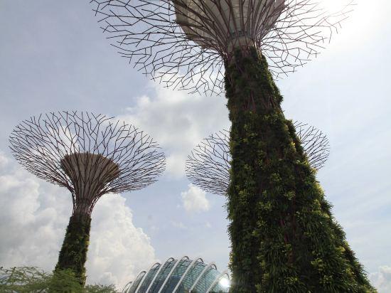 新加坡帝盛酒店(Dorsett Singapore)周邊圖片