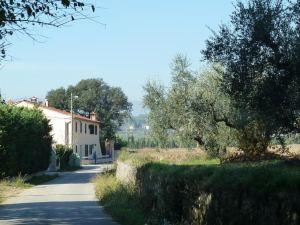 阿爾韋克奇奧雷切奧鄉村民宿(Al Vecchio Leccio)